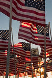 American flags waving at sunset Royalty Free Stock Photography