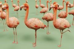 American flamingos render. Realistic 3d render of american flamingo Royalty Free Stock Photos
