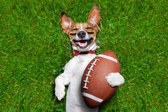 American football dog stock photos