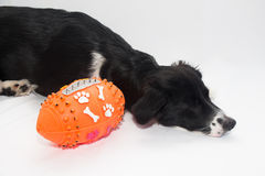 American football dog royalty free stock image