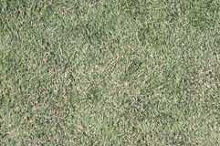 American football field grass Stock Photo