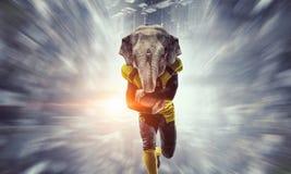 Furious elephants team . Mixed media Stock Photography