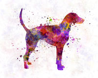 American Foxhound 01 in watercolor Stock Photo
