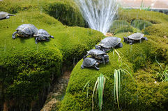 American fresh-water turtles. Emydidae. Royalty Free Stock Images