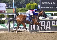 American Gal Racehorse stock photography