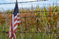 American Heartland. American flag in a midwest cornfield Stock Photography