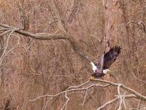 American Hunter stock photo