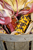 American Indian corn in a basket Stock Photo