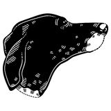 American Leopard Hound Dog Royalty Free Stock Photo