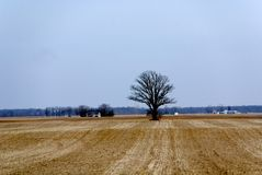 American Midwest Countryside. A midwest farm field ready for winter Royalty Free Stock Photos