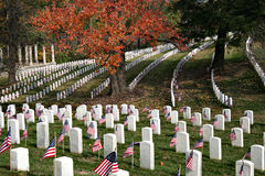 American military cemetery royalty free stock photo
