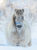 American miniature horse - palomino mare Stock Photos