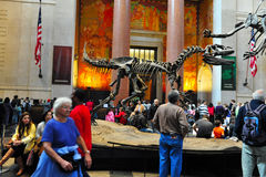 American Museum for National History Royalty Free Stock Photography