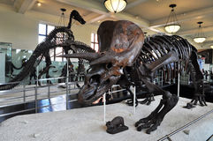 American Museum of Natural History Stock Photography