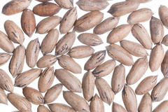 American Nuts background Stock Photography