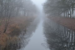 American oaks along the Apeldoorns kanaal Royalty Free Stock Image