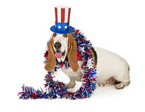 American Patriotic Basset Hound Dog Stock Photos