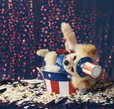 American patriotic Uncle Sam  dog gives election speech loses ba Royalty Free Stock Photo
