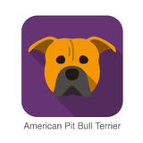 American pit bull terrier dog face flat icon, dog series Stock Images