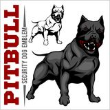 American Pit Bull Terrier, Pitbull. American Pit Bull Terrier, Pitbull isolated on white Stock Image
