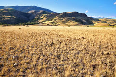 The American prairie in autumn day Stock Photography