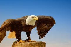 American sea eagle Stock Photo