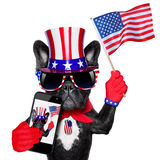 American selfie dog Stock Photos