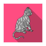 American Shorthair icon in flat style isolated on white background. Cat breeds symbol stock vector illustration. Royalty Free Stock Photography