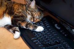 Free American Shorthair Multi-colored Cat Sleeps Royalty Free Stock Photography - 190691597
