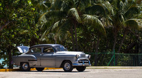 American silver classic car parked under palms. A American silver classic car parked under palms Royalty Free Stock Photo