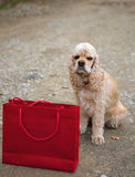 American spaniel and shopping bag Royalty Free Stock Image