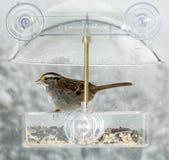 American Sparrow in window bird feeder Royalty Free Stock Photos