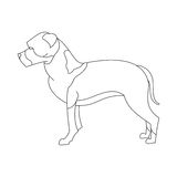 American staffordshire terrier. Breed. Creative outline flat dog. Vector illustration Stock Image