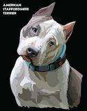 American Staffordshire Terrier colorful vector portrait. Colored portrait of American Staffordshire Terrier isolated vector illustration on black background Royalty Free Stock Photo