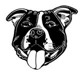 American Staffordshire Terrier Dog. AKC Dog Breed Collection American Staffordshire Terrier Royalty Free Stock Photo