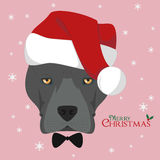 American Staffordshire Terrier dog with red Santa`s hat Royalty Free Stock Photo