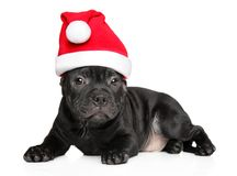 American Staffordshire terrier in Santa red hat stock photo