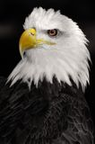 American Symbol Royalty Free Stock Photo