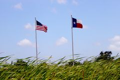 American and Texas Flag Waving Above Cattail plants. American and Texas flags waving low angle above cattail plants stock photography