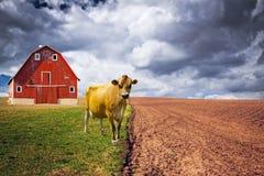 American Traditional Milk Farm Stock Image