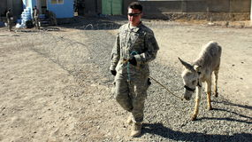 american troops veterinary Stock Image