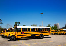 American typical school buses row in a parking lot Stock Photo