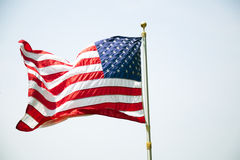 American USA Flag Flying in Wind White Background Stock Image