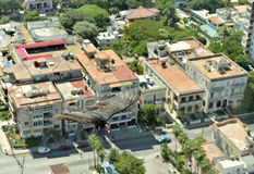The American vultures (Cathartidae Lafresnaye) soars over Havana Cuba. Birds eye view over city of Havana,Cuba. aerial view Royalty Free Stock Images