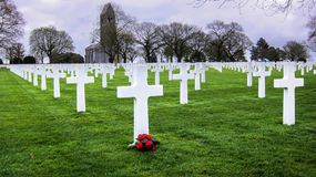 American War Cemetery. White Grave Stones With Red Camillias At The World War II American Cemetery and Memorial In St. James, Brittany, France Royalty Free Stock Images