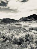 Mountain landscape sepia stock image
