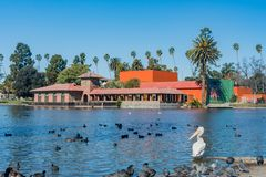 American white pelican, black coot, ducks all around Lincoln Park. At Los Angeles, California royalty free stock photography