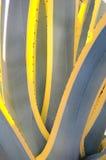 americana agawy variegata Zdjęcia Stock
