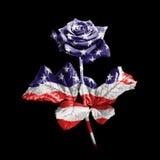 americanen steg royaltyfri bild