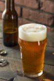 Americano di rinfresco Lager Crafter Beer di freddo fotografie stock